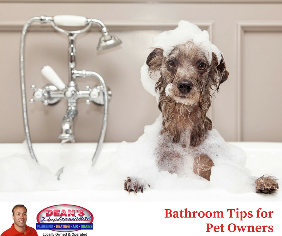 Bathroom Tips For Pet Owners Maple Grove Mn Plumber