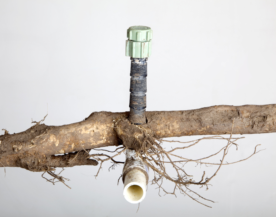 Keep Tree Roots Away From Your Plumbing Plumber Minneapolis